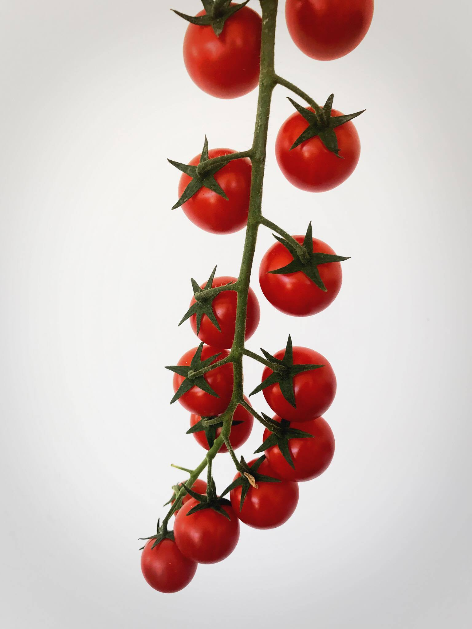 Cherry Tomato from our client!!