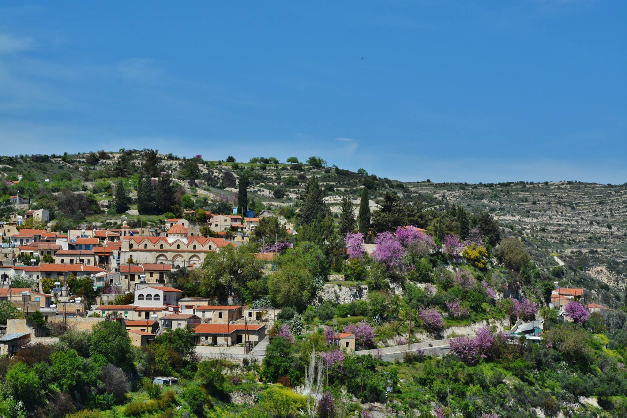 The gorgeous village of Limassol, where the lilac trees paint masterpieces!