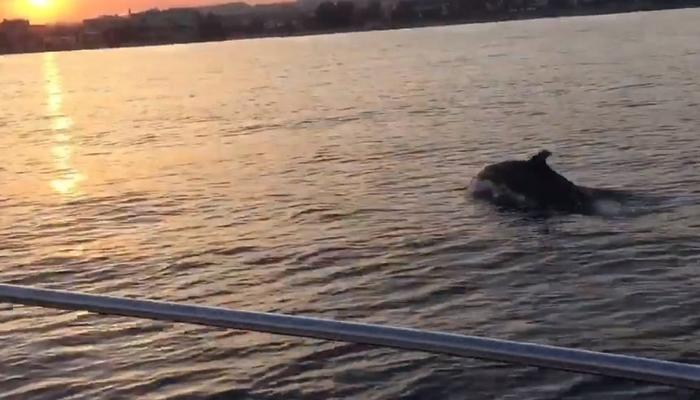 VIDEO: Some lucky gyus enjoyed an amazing sunset view with dolphins!
