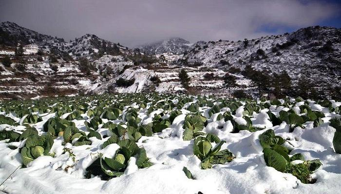 Villages, hills and vineyards in Limassol covered in fluffy snow