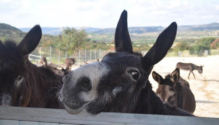 Become the foster parent of a cute donkey with just 24 euros a year!