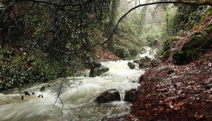 VIDEO: Rumbling rivers on Troodos with water coming down!