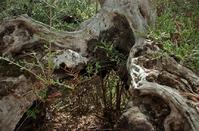 PHOTOS: A peculiar creation of nature in the Limassol countryside!