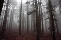 PHOTOS: The 'haunted' Troodos forest, a destination for the adventurous ones!