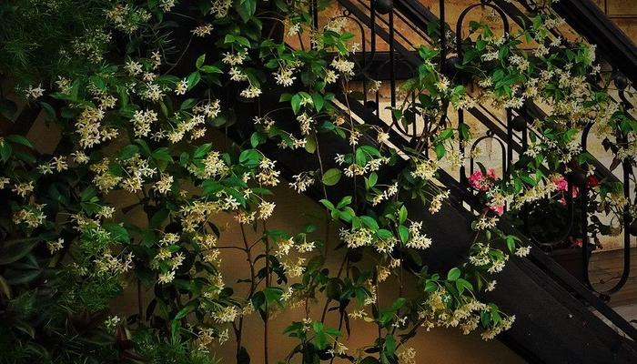 In this alley in Limassol, the scent of jasmine will swipe you off your feet!