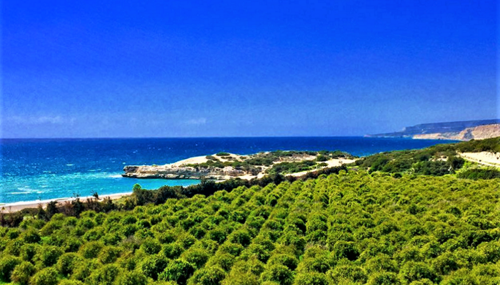 PHOTOS: A beach of unreal beauty is waiting for you in Limassol!