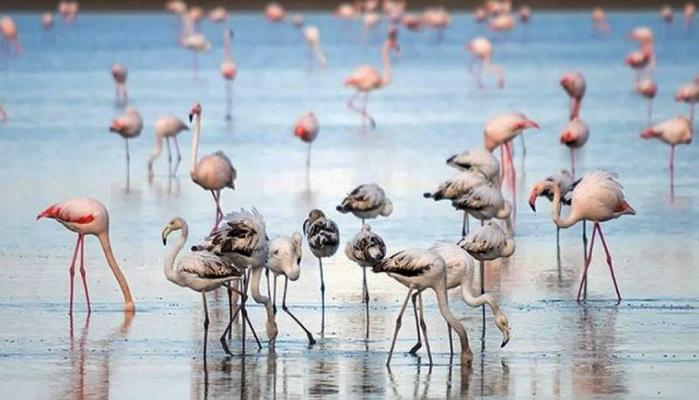 Pink spectacular by flamingos: Akrotiri salt lake came 'back to life' thanks to the first rain!