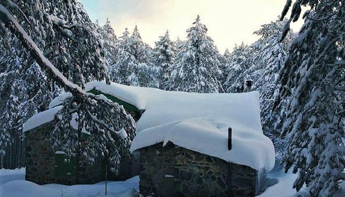 Pictures out of a fairy tale of the Troodos forest lost... in the snow!