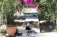​The Monastery of Saint Nicholas of the Cats and the legends around its name