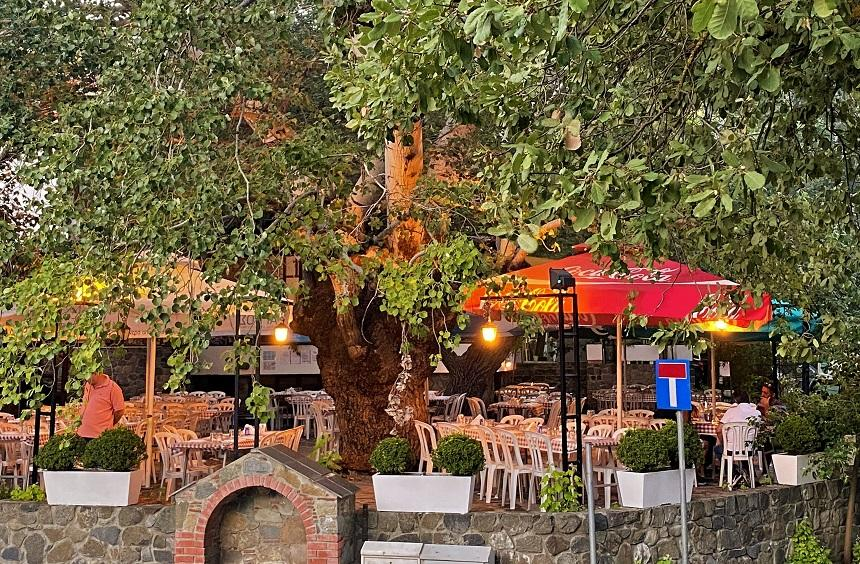 Koilada Restaurant: One of the most well-known dining destinations in the Limassol mountains!