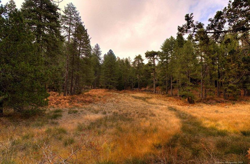 A magical landscape, hiding within the dense forest on Troodos mountains!
