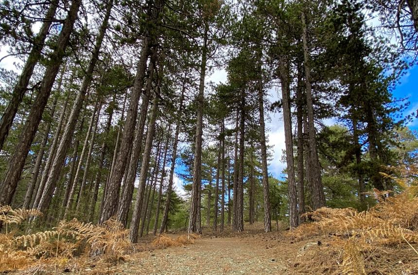 Wheelchair-accessible Livadi Trail (Troodos)