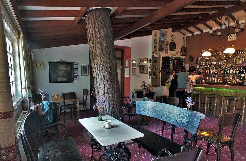 A unique bar in the mountain region of Limassol, built around a pine tree!