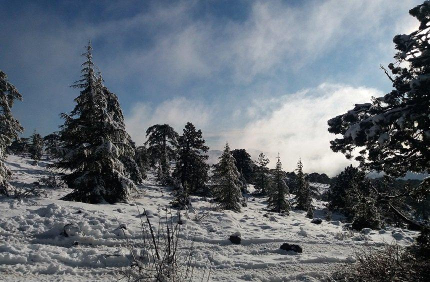 20 + 1 magical images from the snowy New Year's Day on Troodos!