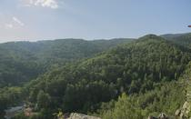 View to the Platres Forest from the rock.