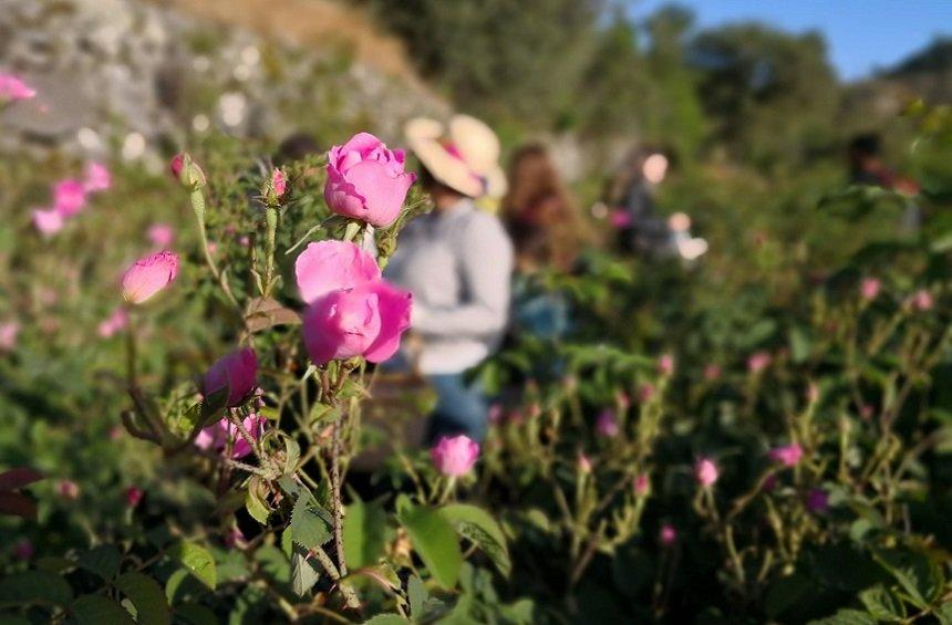 PHOTOS: This village in Limassol will have you waking up in roses!